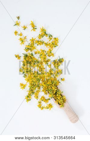 Perforate St John`s-wort Is Very Rare And Healthy Plant
