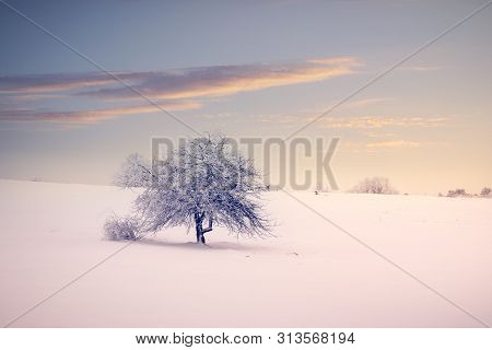 Winter Landscape In Sunset. Mountain Landscape In Winter. Winter Sunset. Lonely Tree Under Snow In S