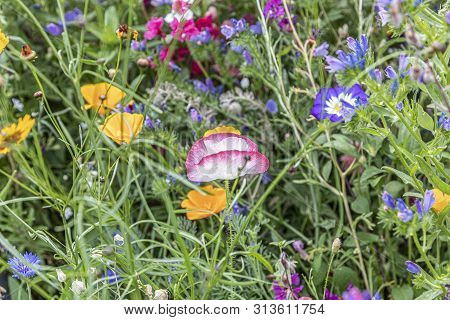 blooming colorful wildflower meadow gives a harmonic background poster