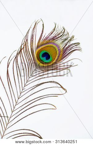 Peacock Feather Color Full Isolated White Background Decor