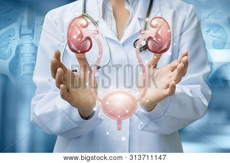 The Doctor Shows The Urinary System On Blurred Background.