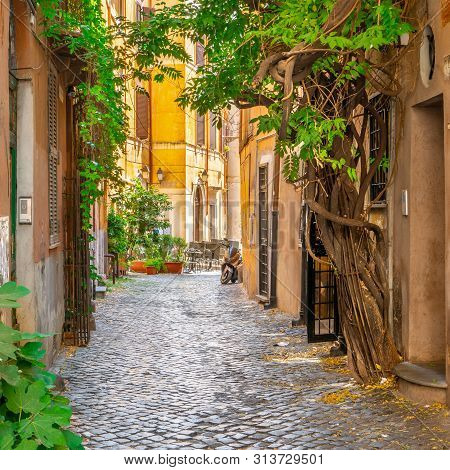 Cozy Street With Plants In Trastevere, Rome, Europe. Trastevere Is A Romantic District Of Rome, Alon