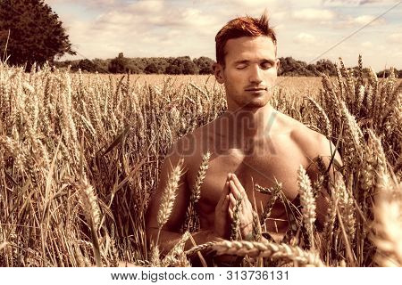 Shirtless Good Looking Man Sitting In Cornfield On A Summer's Day