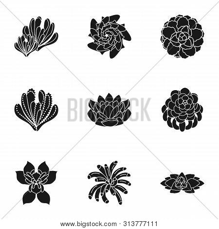 Succulent Plant Icon Set. Simple Set Of 9 Succulent Plant Vector Icons For Web Design Isolated On Wh