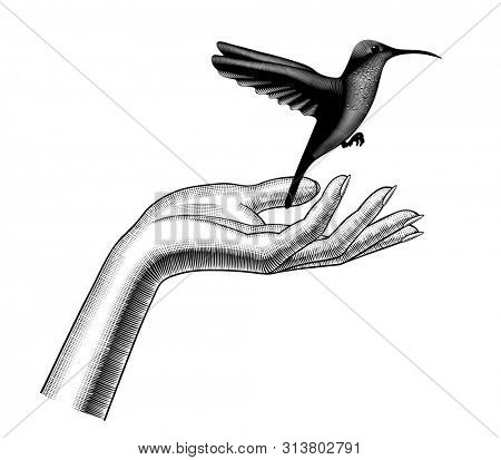 Woman's palm hand let go hummingbird. Vintage engraving stylized drawing