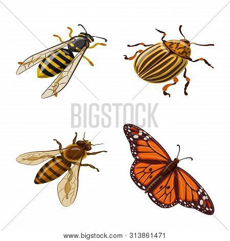 Vector Illustration Of Insect And Fly Logo. Set Of Insect And Entomology Stock Symbol For Web.