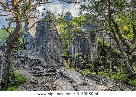 Sulov Rocks, Slovak Republic. Seasonal Natural Scene. Detail Of Roots. Hiking Theme.