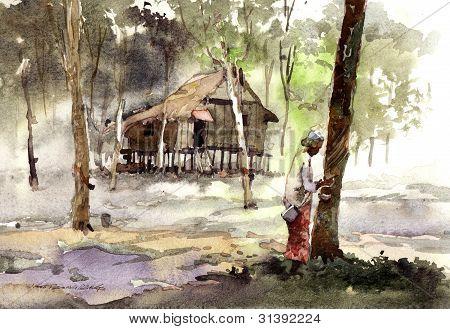 rubber plantation village