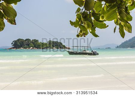 Beautiful Beach With White Sand And Tree