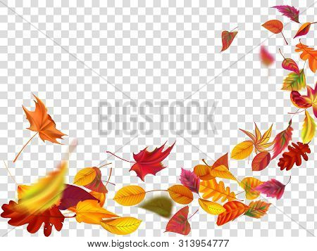 Autumn Falling Leaves. Leaf Fall, Wind Rises Autumnal Foliage And Yellow Leaves. Maple Tree Gold Fal