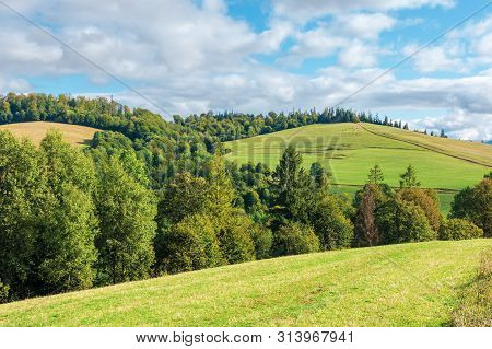 Beautiful Countryside In Early Autumn. Trees Along The Grassy Meadow On The Hill. Sunny Weather With