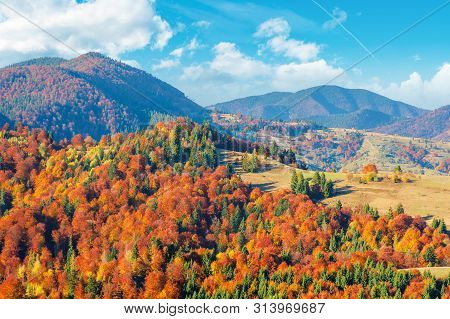Wonderful Autumn Afternoon In Mountains. Trees On The Hill In Colorful Fall Foliage. Sunny Weather W