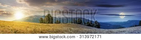Beautiful Panoramic Landscape In August. Row Of Beech Trees On The Meadow In Weathered Grass. Mounta