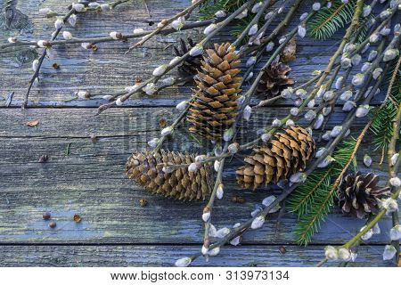 Pussy-willow branches on old shabby wooden surface. Willow twigs in early spring. Flat lay, top view with copy space. poster