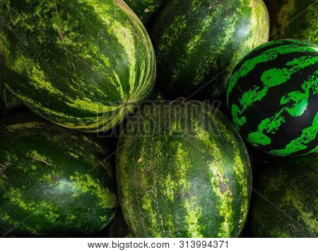 Artificial, Rubber Watermelon Among Real Watermelons. The Season Of Watermelon, Watermelon Day. Text