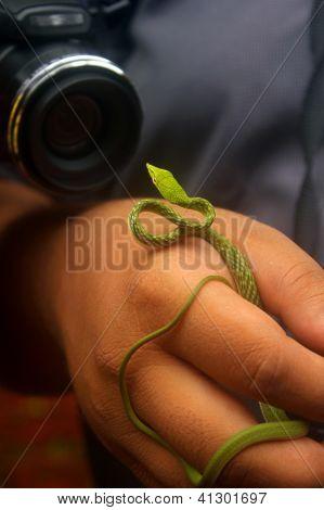 Snake Wildlife Photography
