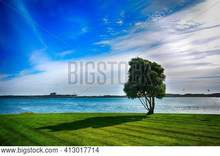 A Green Tree Against A Blue Sky In The City Esposende, Portugal. The Second Day Is The Way To Santia