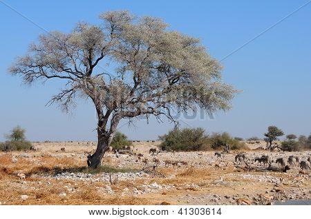 View Of The Waterhole At The Okaukeujo Rest Camp, Etosha National Park, Namibia