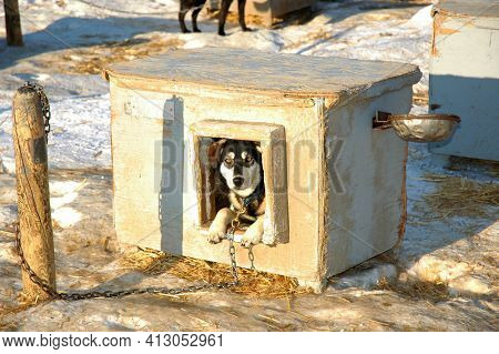 WASILLA, ALASKA - MARCH 2, 2007: Dog house at Happy Trails Kennel, and the home of four-time Iditarod Champion Martin Buser.