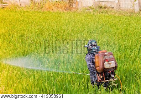 Rice Farmer. The Rice Fields Are Beginning To Start. Inject Insecticides In Rice Fields.