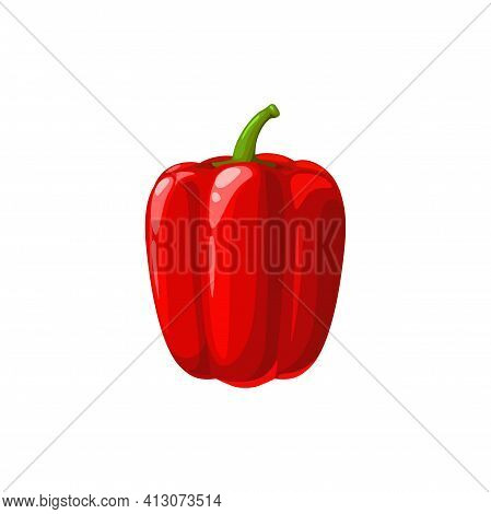 Red Bell Pepper Or Paprika Vector Vegetable, Natural Fresh Healthy Food. Cartoon Bulgarian Pepper De