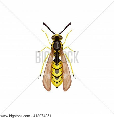 Wasp Icon, Pest Control Insect Parasite, Hornet Vector Isolated. Pest Control Disinsection, Disinfec
