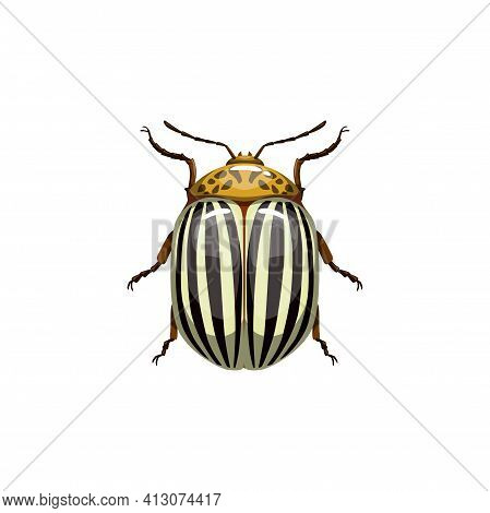 Colorado Beetle, Insect Parasite Bug Pest Control And Agriculture Disinsection Service, Vector Isola
