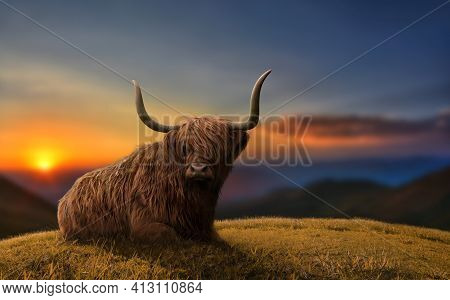 Large Highland Cattle In A Meadow In Top Of A Hill. Beautiful Dramatic Scenery.
