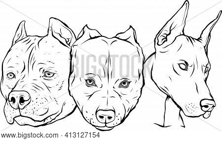 Draw In Black And White Of Heads Of Dogs Pitbull Dobermann Bulldog Vector