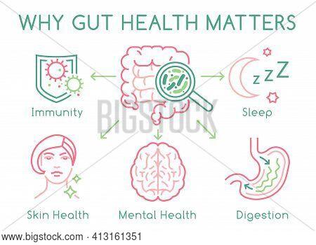 Gut Health Horizontal Poster. Editable Vector Illustration