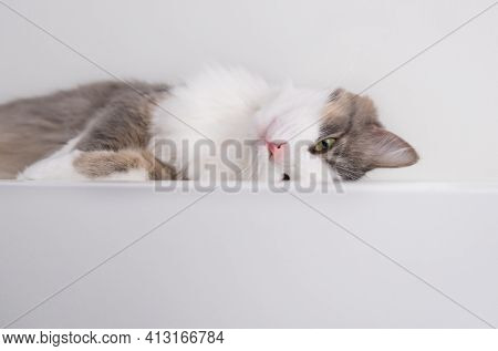 A Beautiful Gray Cat Sits On A White Table. Waiting For Spring. Cats In The Interior. World Cat Day,
