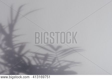 Palm Leaf Shadows On Grey Wall. Copy Space. Backdrop Texture For Design