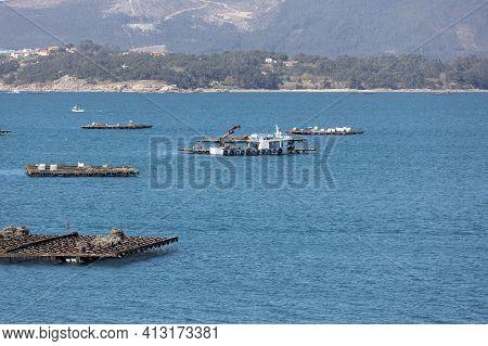 Mussel Boat Sailing Between Mussel Wood Platform Called Batea. Marine Landscape. Rias Baixas, Galici