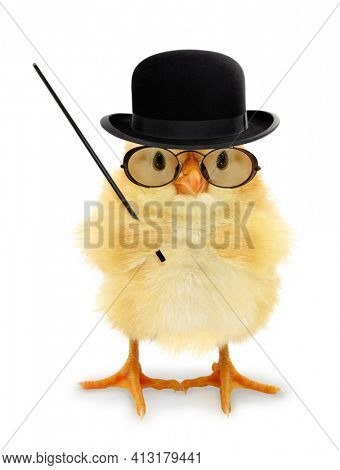 Cute cool chick teacher professor lecturer with pointing stick funny conceptual image