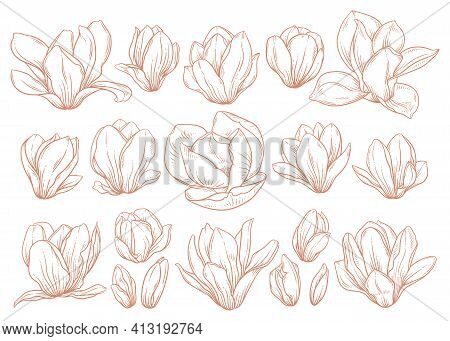 Set Of Magnolia Flowers On White Background. Floral Ink Drawings In Gold Colors, Sketch Style. Eleme
