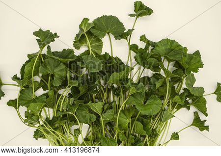 Bunch Of Tender Oval Leaves On Stems Early Spring Plant Mallow Armenian Used In Medicine And Food