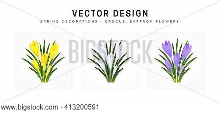 Crocus Sativus, Saffron Flower. Set Of Bouquets Of Flowers In Yellow, White And Blue Purple. Bushes