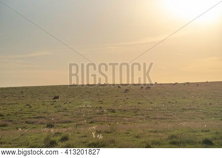 Rural Landscape Of The Pampas Of Rio Grande Do Sul In Brazil And The Presence Of Farm Animals.
