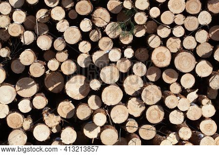 Dry Felled Logs Stacked On Top Of Each Other. Firewood Is On The Heap. Sawn Trees Piled By A Wall. H