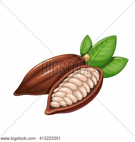 Cocoa Beans Vector Icon. Chocolate Sweets Design. Healthy Detox Natural Product Superfood Illustrati