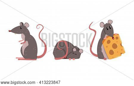 Funny Rat As Long-tailed Rodent Sleeping And Holding Cheese Slab Vector Set