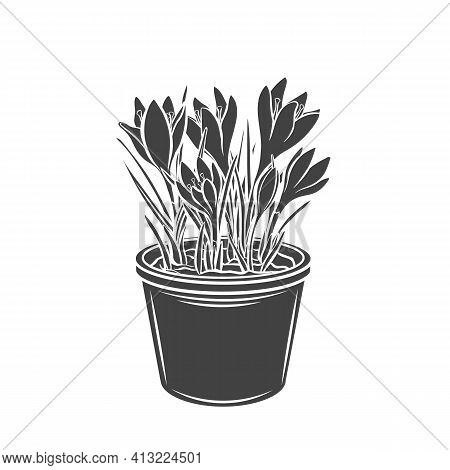 Crocus In A Pot Glyph Icon, Vector Cut Monochrome Badge. Garden Flowers For Gardening Desing Priduct