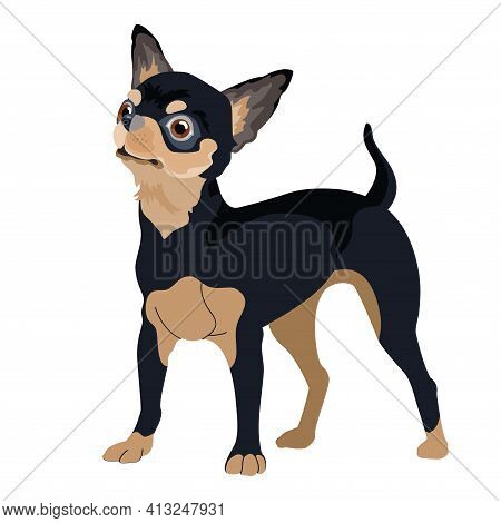 Dog Breed Chihuahua. Pet Portrait. Vector Flat Style.