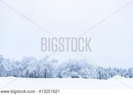 Winter Panoramic. Frost Forest Nature Scene With Beautiful Snow, Morning Sun, Blue Sky. Snowy White