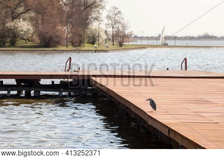 Black Crowned Night Heron, Also Called Nycticorax, Standing On A Pier In Palice Lake, In Serbia. It