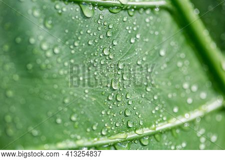 Green Leaf Macro Closeup With Droplets Splash On Surface, Purity Nature Background. Sunny Nature Det