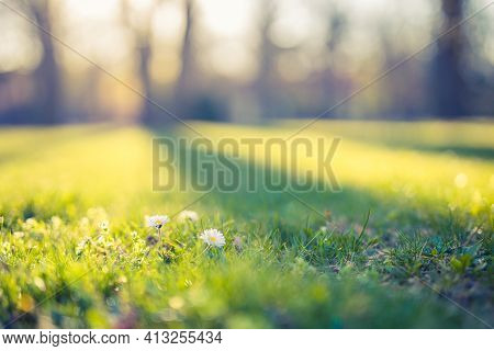 Serene Sunny Field Meadow In Spring. Lovely Daisy Flowers With Blurred Spring Summer Nature Landscap
