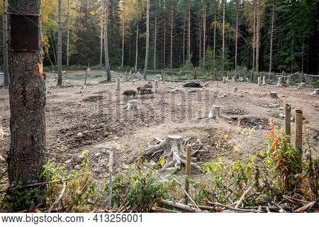 Wild Boars On The Farm. Wild Boar Enclosure. Wild Boars At The Zoo. High Quality Photo