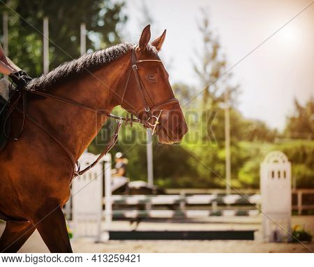 A Bay Horse With A Rider In The Saddle And With A Dark Trimmed Mane Participates In Show Jumping Com