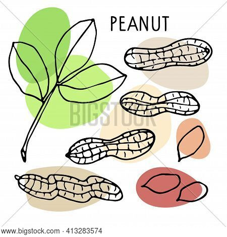 Peanut Set. Hand Drawn Vector Nut, Nut Kernels, Peanut Text. Sketch With Colored Spots. Organic, Fre